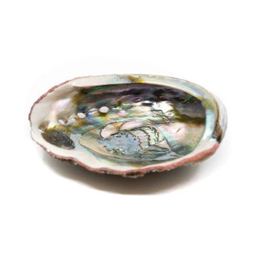 Abalone Schelp - Groot - 90 tot 100 mm
