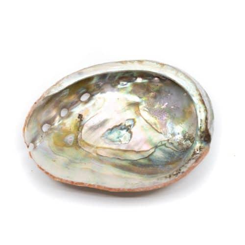 Abalone Schelp - Klein - 50 tot 70 mm