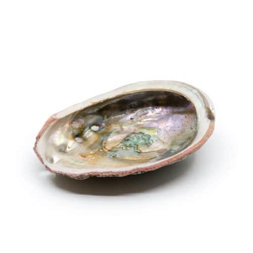 Abalone Schelp - Medium - 70 tot 90 mm